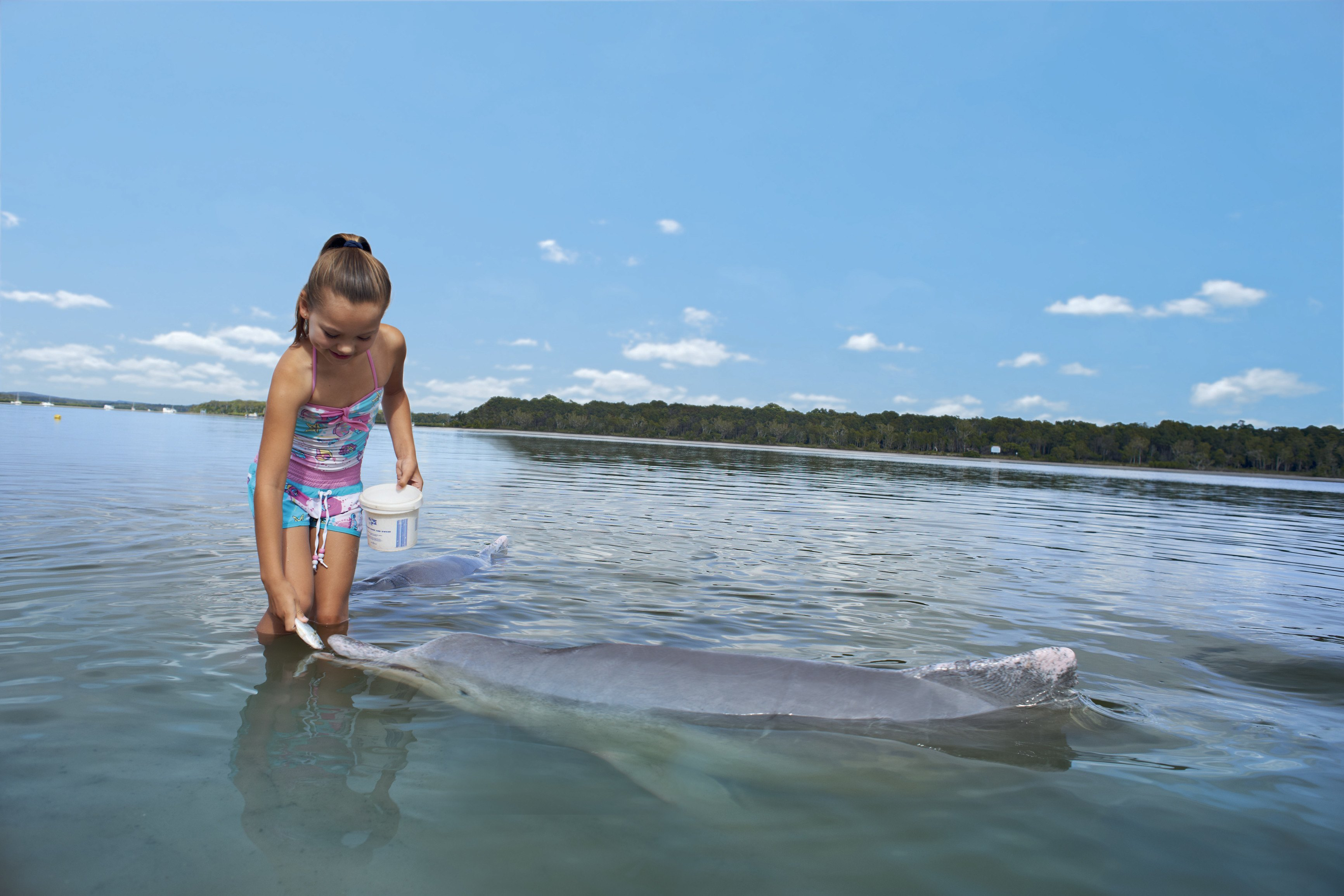 girl feeding dolphin at barnacles dolphin centre